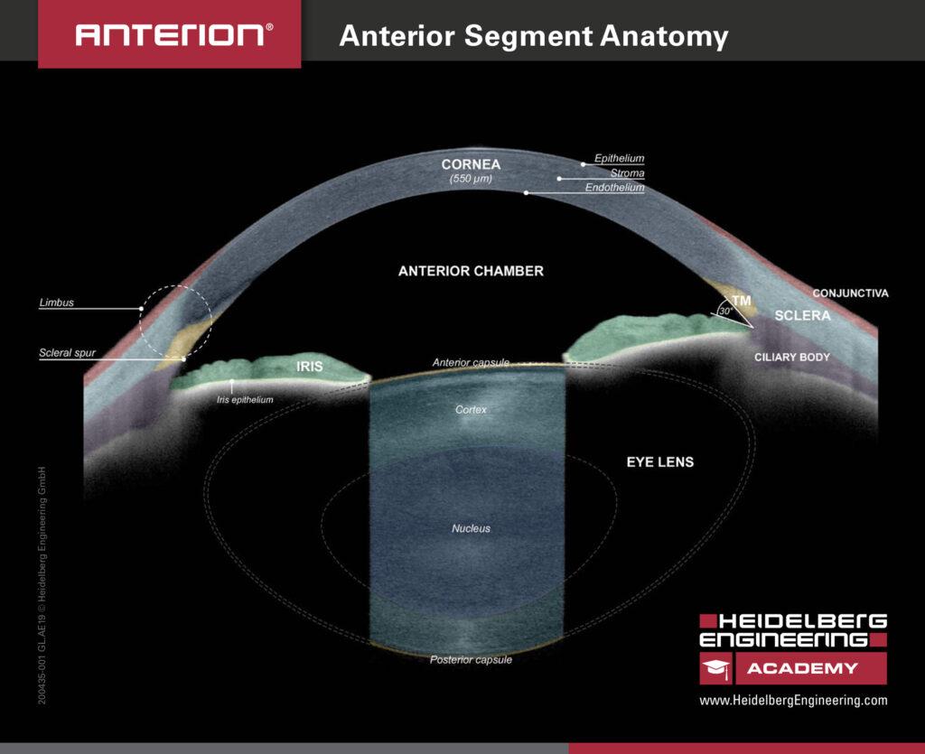 Biométrie segment antérieur Antérion